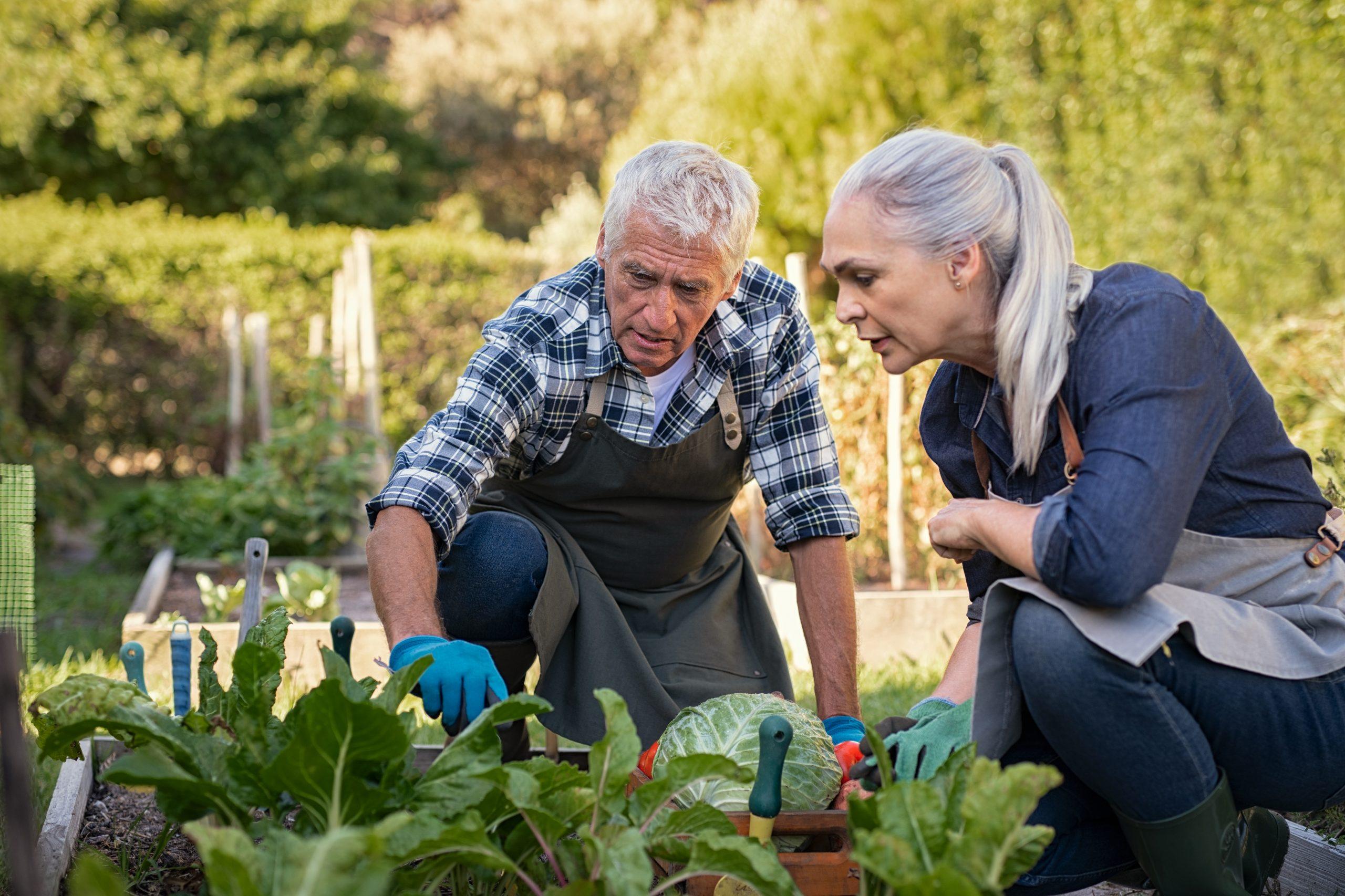 Hai un'azienda agricola? Migliora i processi con un CRM su misura